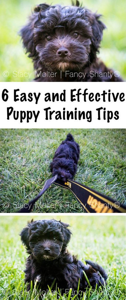 6 Easy and Effective Puppy Training Tips