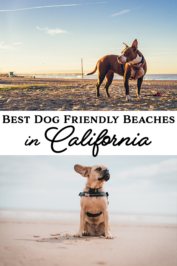 We found the best dog friendly beaches in California! Come see if your favorite beach made the list, or find a new dog friendly beach to visit.