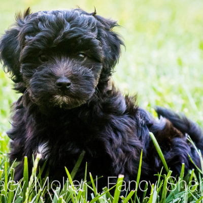 10 Things You Need for Your New Puppy