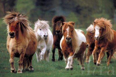 Mini Ranch Day