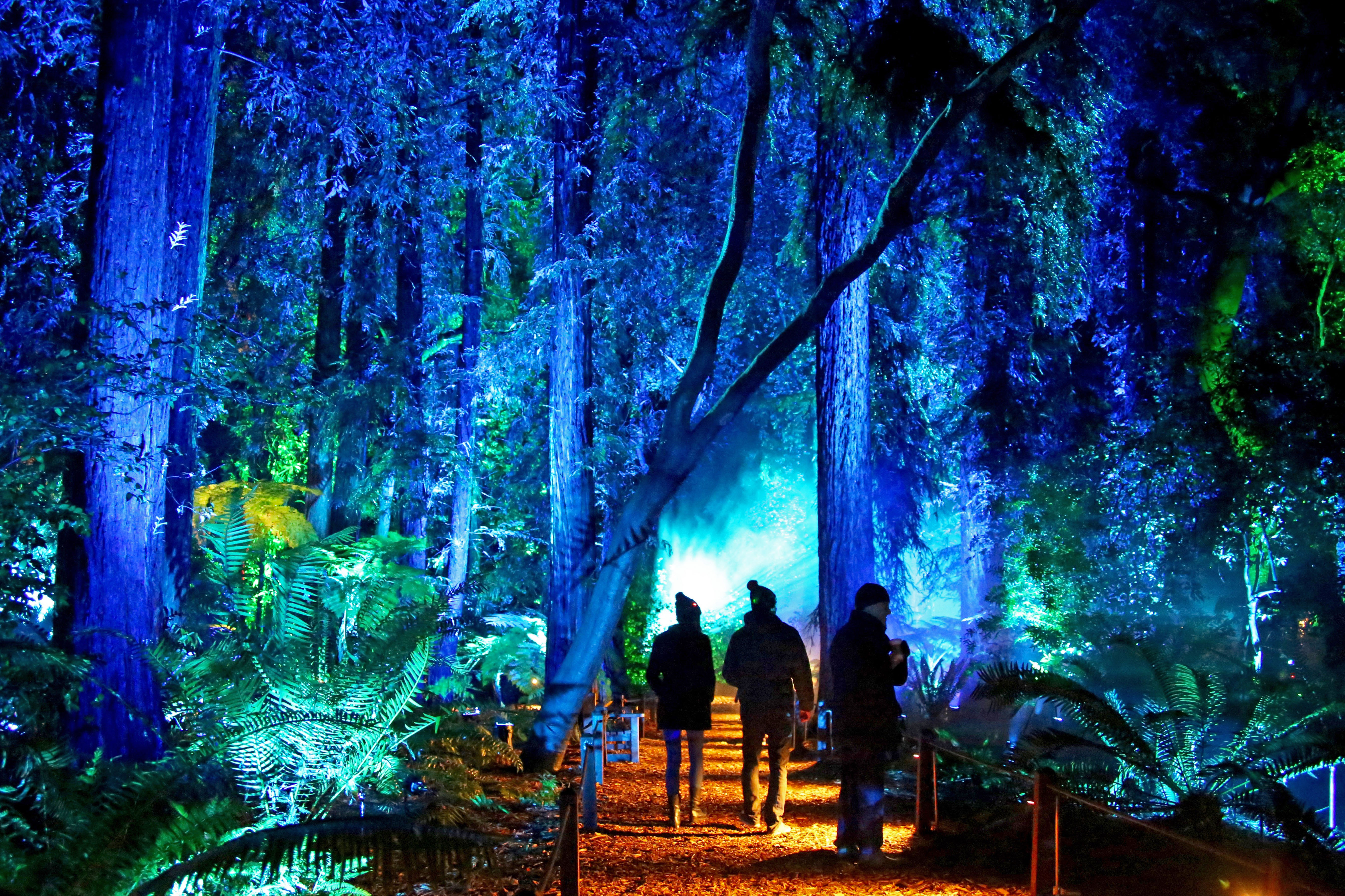 Enchanted Forest of Light