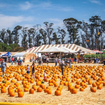 22nd Annual Fall Harvest Festival at Underwood Farms