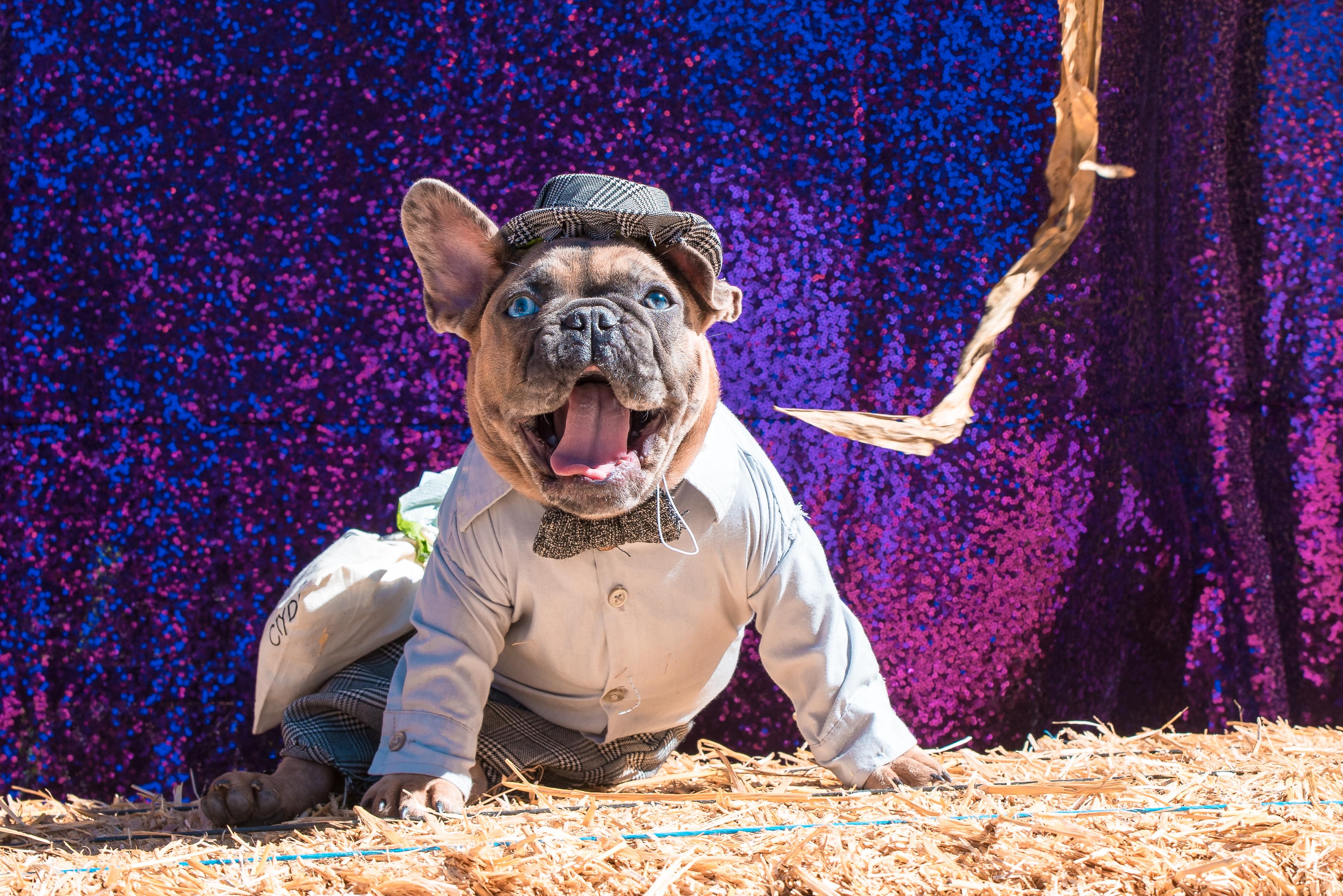 7th Annual Ventura Harbor Village HOWL-O-Ween Dog Costume Contest