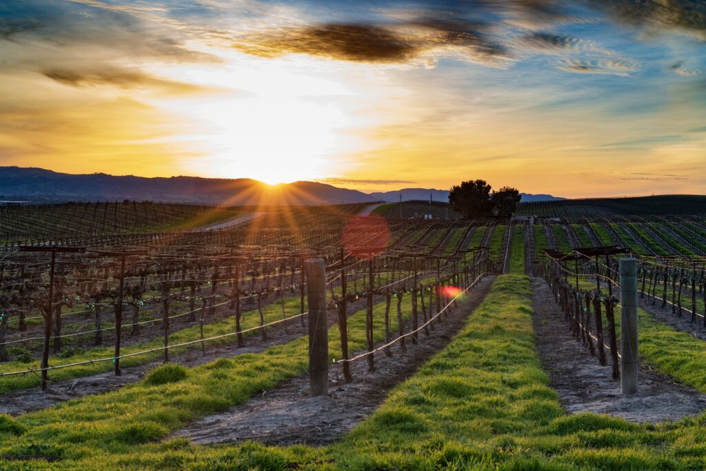 6 Family-Friendly Reasons to Take the Kids to Santa Ynez Valley Wine Country