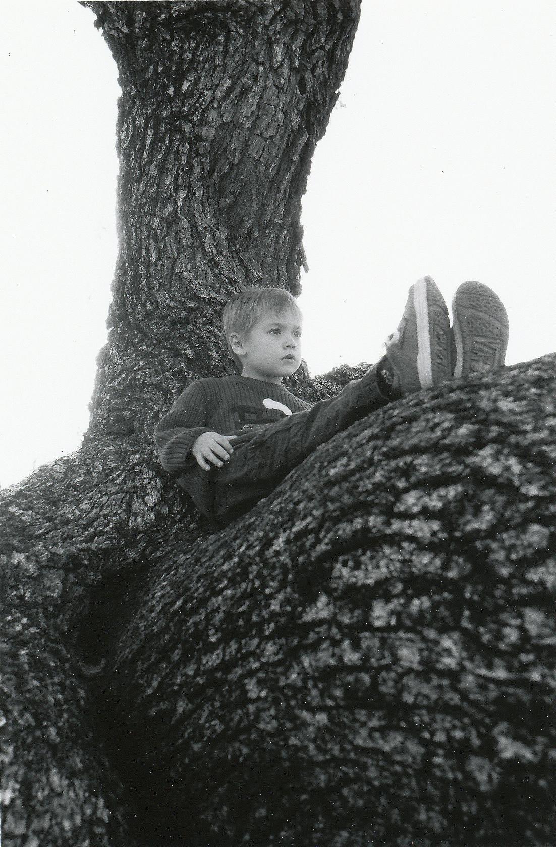 Boy Sitting on a Tree