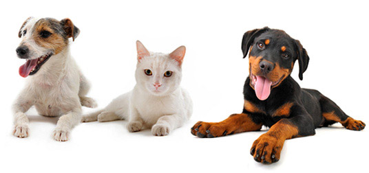 Veterinarian Forms Gambrils, Crofton, Ft. Meade, Odenton, Bowie | Prime Care Animal Hospital