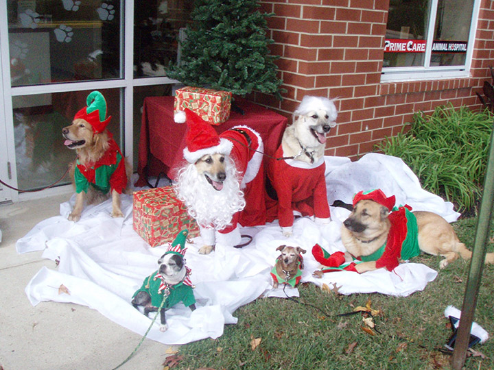 Veterinary Christmas Pet Photos