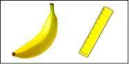 Banana Ruler Thumb