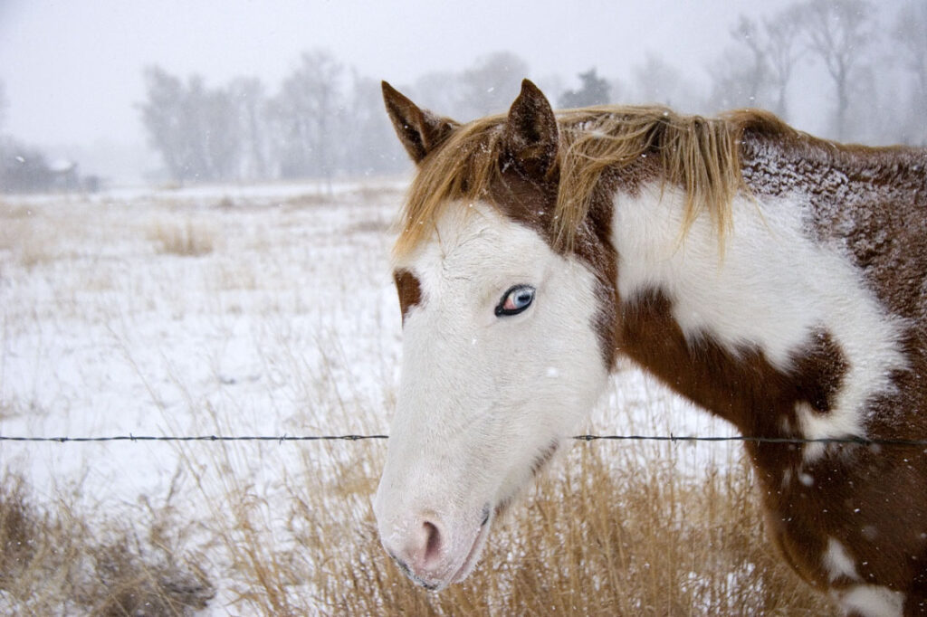 Blue Eyed Painted Horse