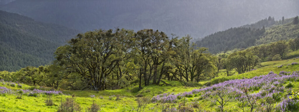 May at the Lupine Loop