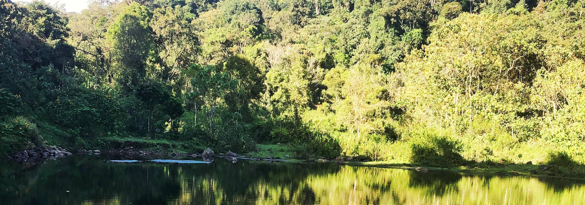 conservation of mt Kenya forest