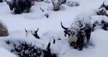 Dzatoe snow disaster