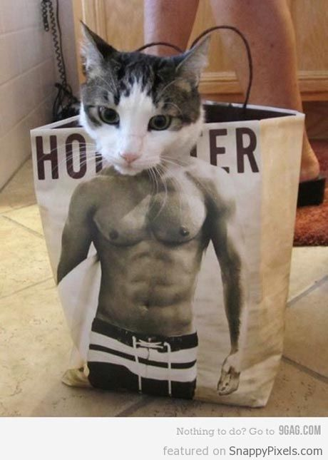 abercrombie-cat-in-bag (10)