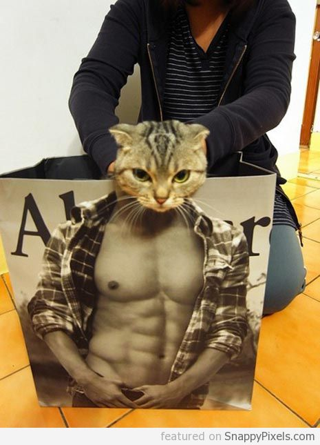 abercrombie-cat-in-bag (3)