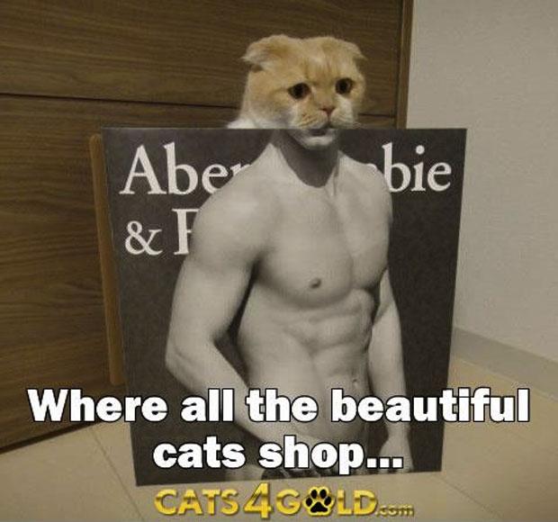 abercrombie-cat