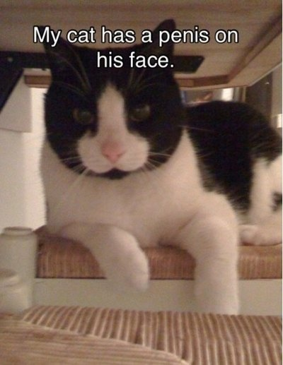 cats-suck-pictures-8