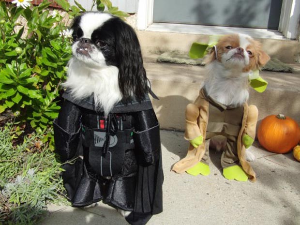 dog-darth-vader-costume (2)