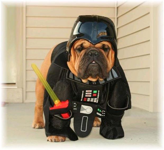 dog-darth-vader-costume (4)