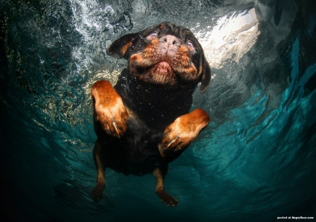 dog-diving-under-water (12)