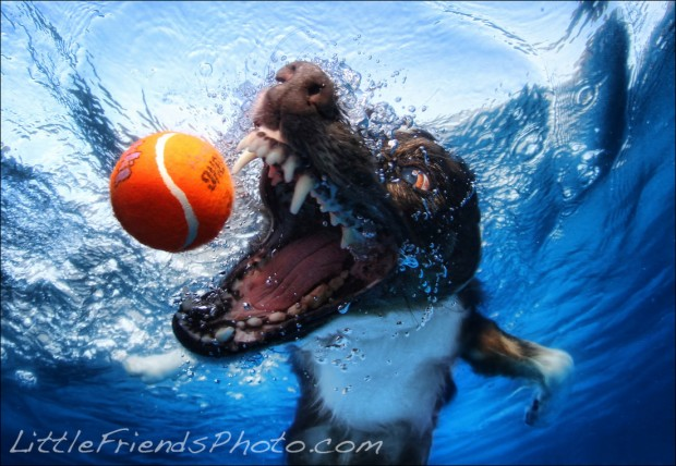 dog-diving-under-water (1)