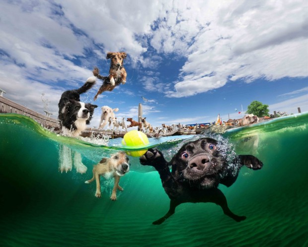 dog-diving-under-water (19)