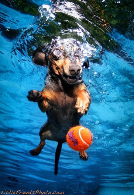 dog-diving-under-water (22)