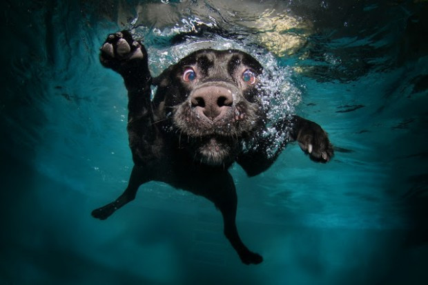 dog-diving-under-water (23)