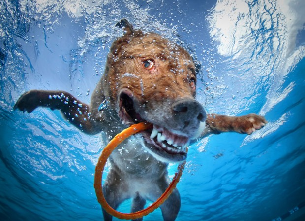 dog-diving-under-water (25)