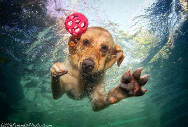 dog-diving-under-water (26)