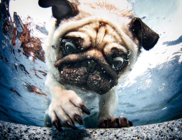 dog-diving-under-water (4)