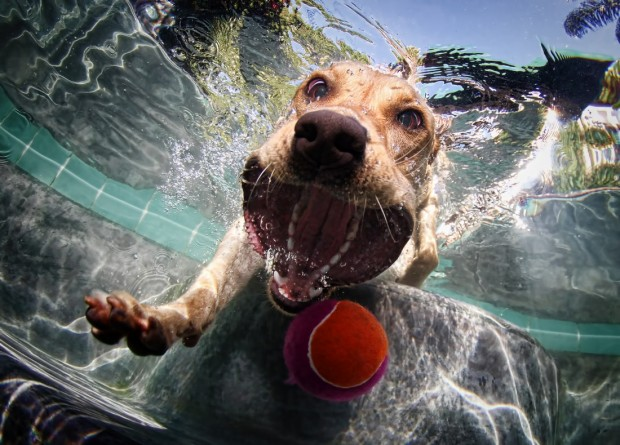 dog-diving-under-water (6)