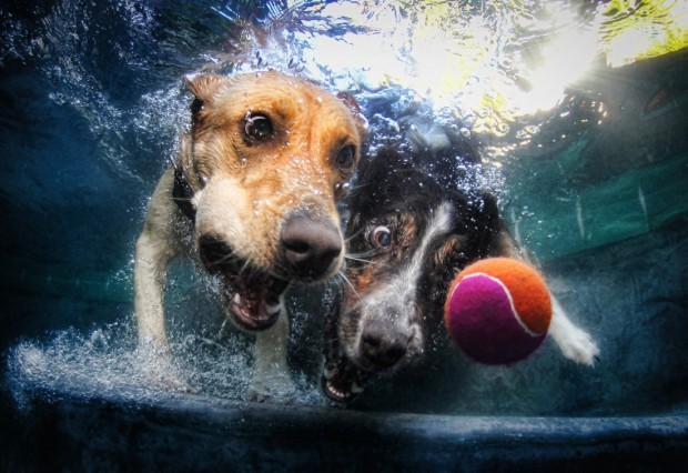 dog-diving-under-water (7)
