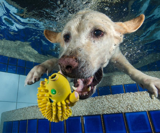 dog-diving-under-water (9)
