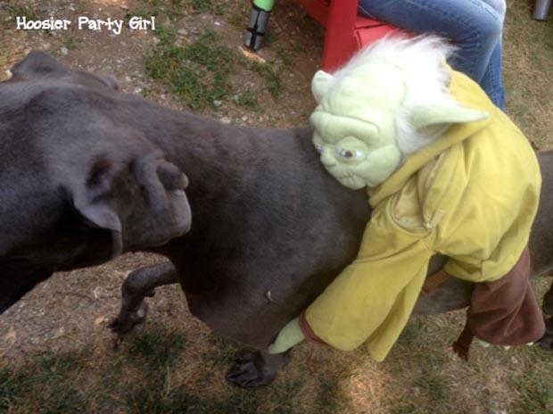 dog-star-wars-costume (2)