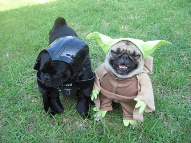 dog-star-wars-costume (24)