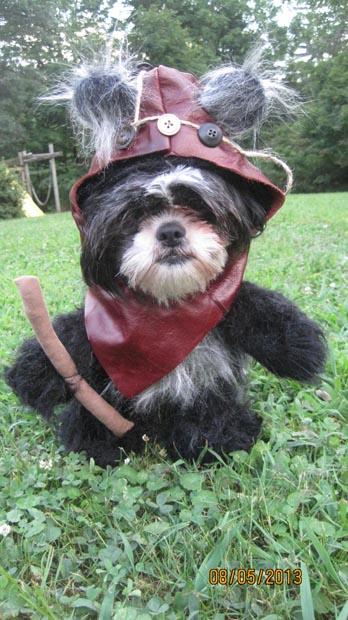 dog-star-wars-ewok-costume (7)