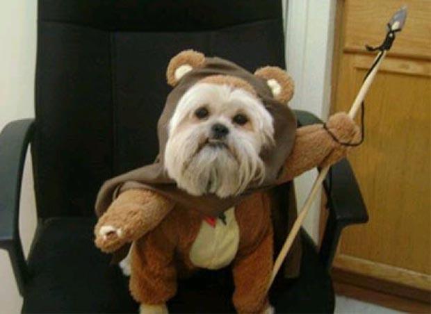 dog-star-wars-ewok-costume (9)
