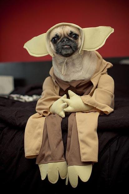 dog-yoda-costume-star-wars (3)