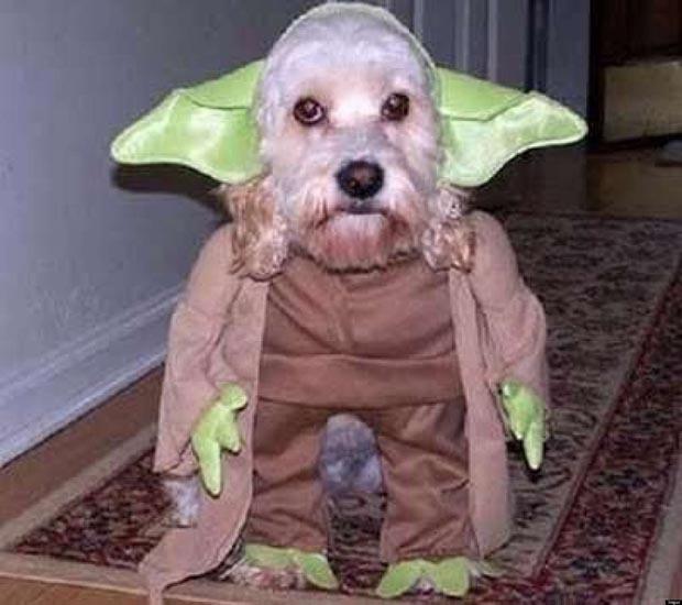 dog-yoda-costume-star-wars (4)