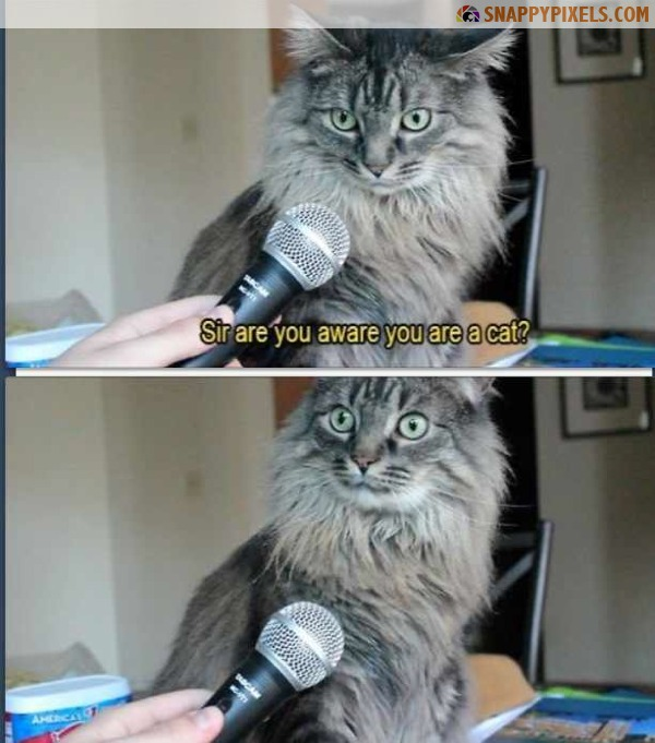 29-very-funny-pictures-3