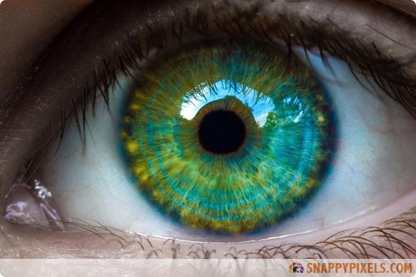 amazing-animal-eye-pictures-01