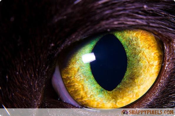 amazing-animal-eye-pictures-05