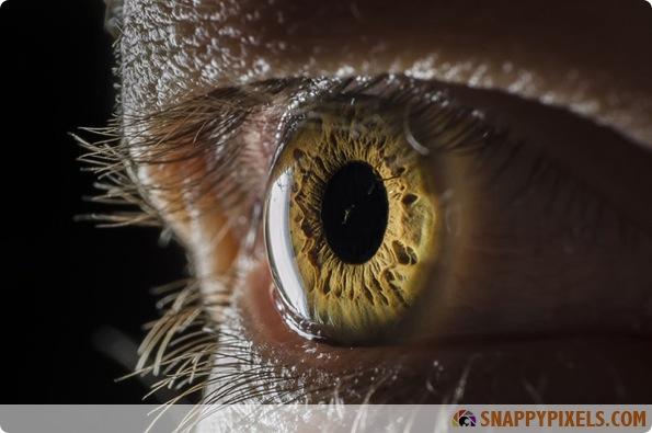 amazing-animal-eye-pictures-06