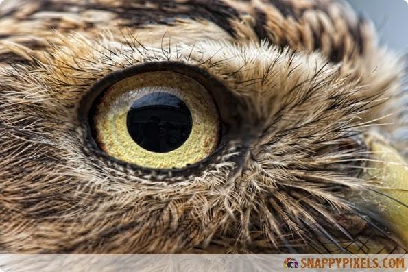 amazing-animal-eye-pictures-07