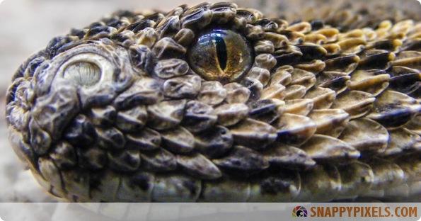 amazing-animal-eye-pictures-09