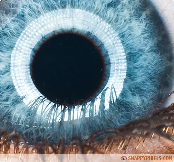 amazing-animal-eye-pictures-12