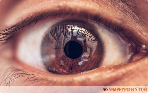 amazing-animal-eye-pictures-14