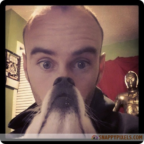attractive-dog-beards-10
