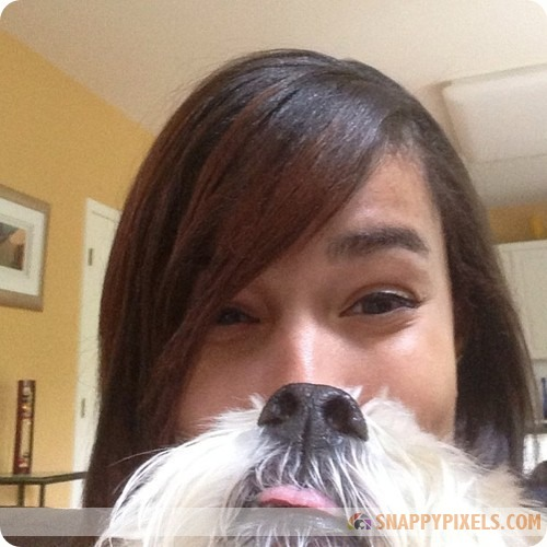 attractive-dog-beards-11