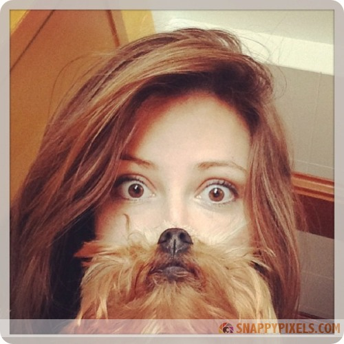 attractive-dog-beards-3